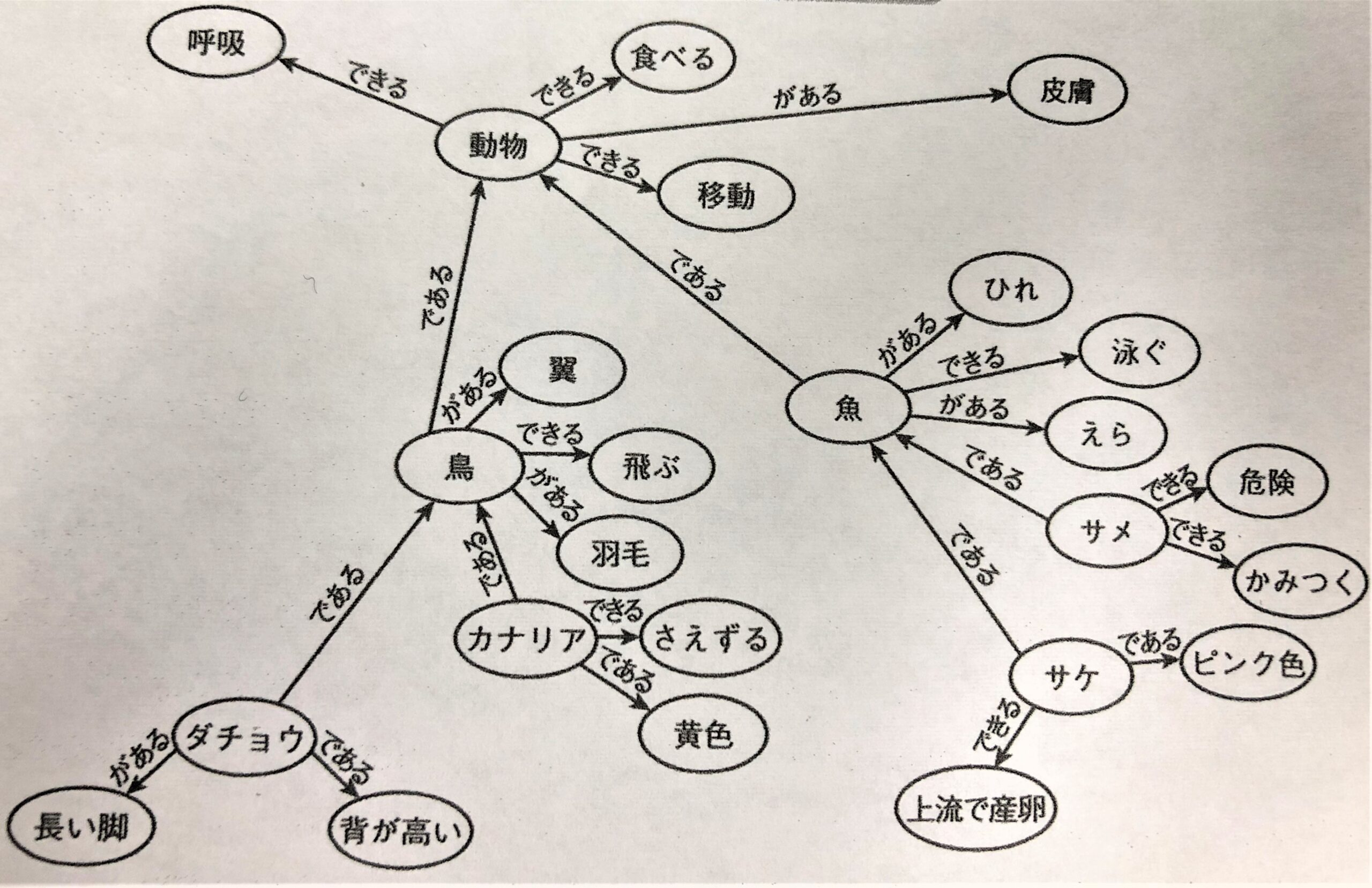 活性化拡散モデルによる知識構造の例